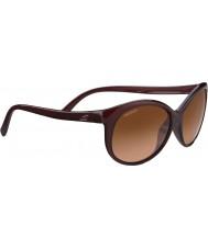 Serengeti 8430 Caterina Tortoiseshell Sunglasses